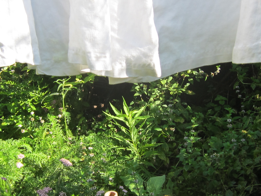 Laundry - the hems of the smocks on the clothesline